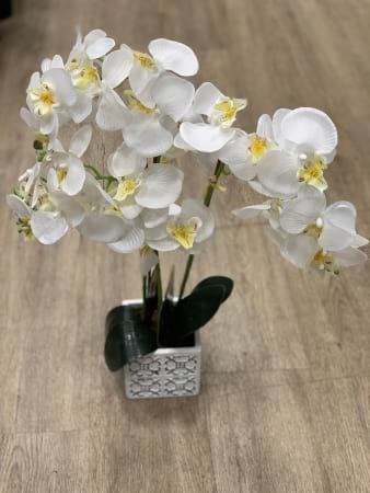 Fabulous Phalaenopsis orchid (Artificial)