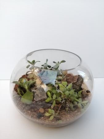 Terence the large Terrarium