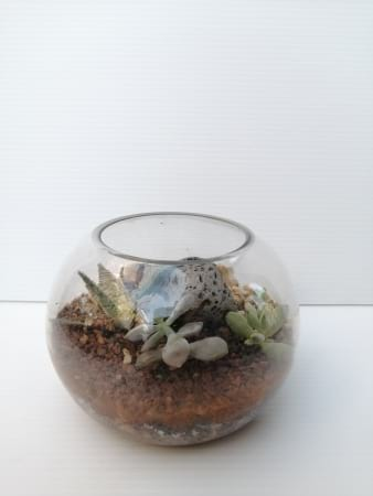 Terry the little Terrarium