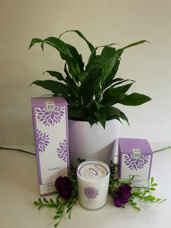 Peace Lily Package