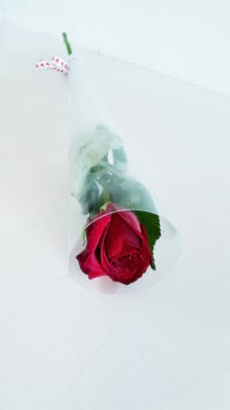 Single rose in tube - real